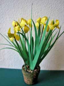 Iris Medium - Yellow